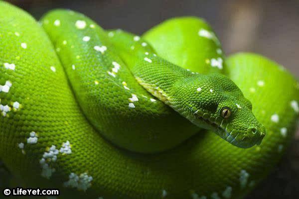 男子半路遇上一條「藍色的蛇」張開大嘴要攻擊他!他躲開撿回一命,回家卻發現……後悔死了