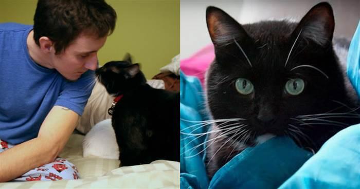 真人故事!一名退伍軍人自殺前『遇到一條生命的流浪貓』讓他決定活下來...