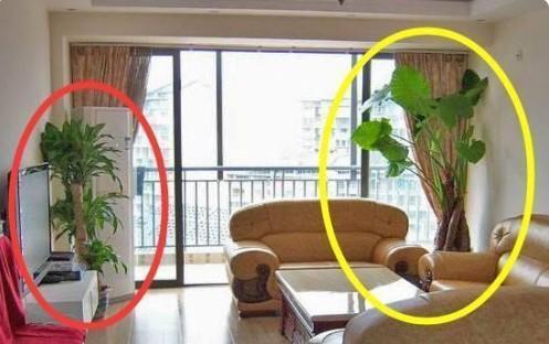 這幾種植物千萬別擺家中,特別第3種富人從不放,否則入住必破財(1/13)