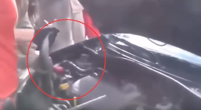 蛇攻擊車的刺激場麵,1.30秒嚇你一身冷汗,難得一見!