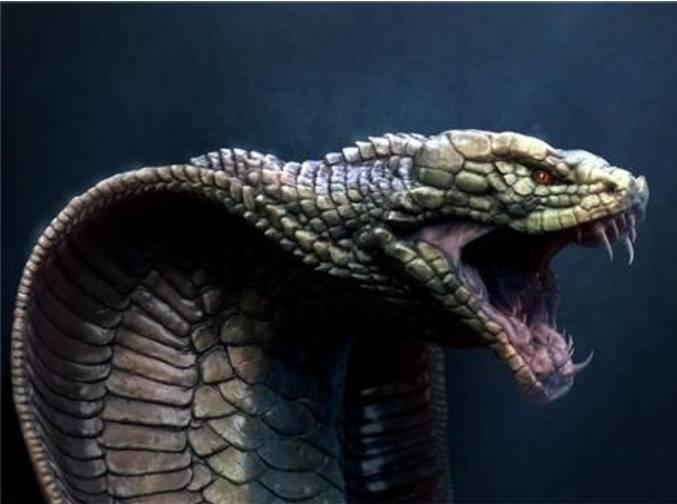百年难得一见!实拍眼镜王蛇,巨蟒和森蚺,最疯狂的,太