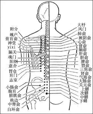 為什麼經絡不通,要先調膀胱經?(附經絡圖)