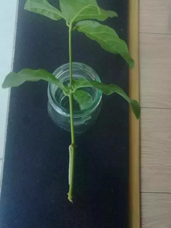 塑料瓶裏裝點水,能插20種花,生根不用愁,新手一學就會!