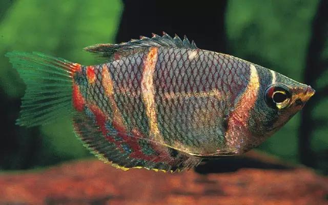 14個關鍵治癒壞心情 | 養魚秘籍