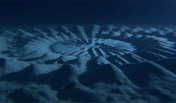 23. 水底的麥田圈:在日本,公河豚會做出這樣的形狀作為求偶的儀式。<BR><BR>