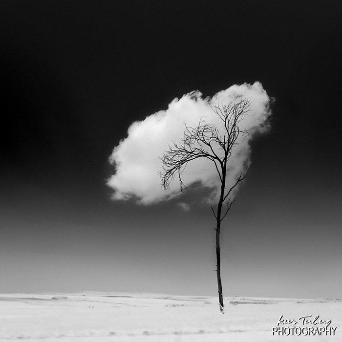 棉花糖的樹。<BR><BR>