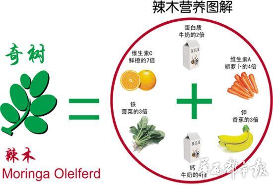 長期吃辣木moringa,竟然變成這樣!看完後,你就後悔幹嘛沒早點知道了.....
