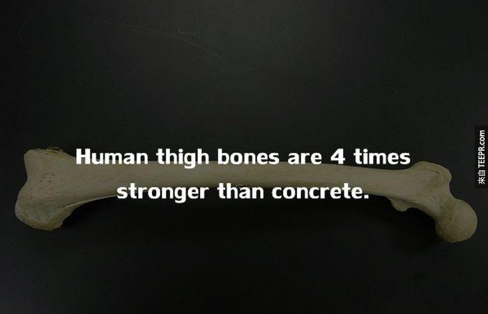 人類的大腿骨,比混凝土堅硬4倍。<BR><BR>