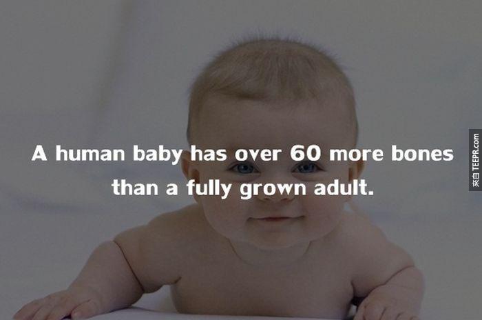 嬰兒比成人多擁有超過60根的骨頭。<BR><BR>