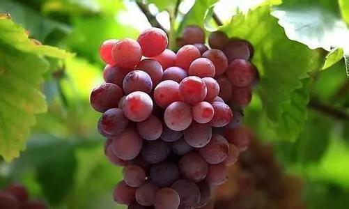 用「它」洗水果,竟比蘇打粉、鹽巴「清潔效果」更強100倍!吃的更放心了!