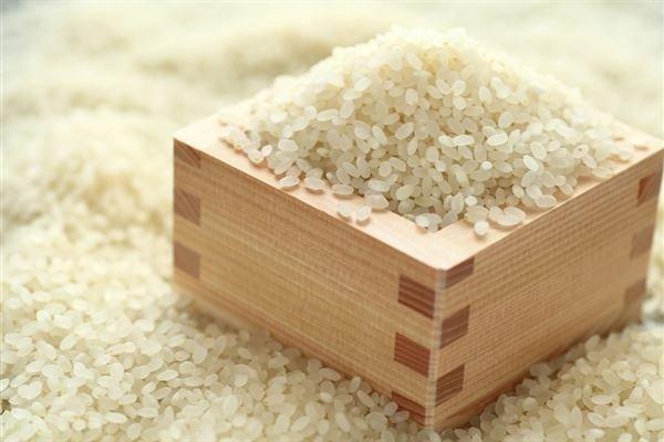 白麴的主要原料是磨成粉的米和米糠,蒸熟後加入適量中藥和麴粉混合發酵而成。